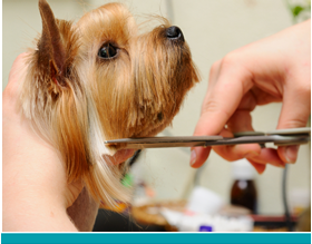 Mobile Dog Grooming Tucson